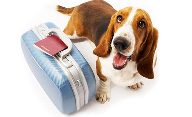 강아지와 여행하기 위한 안전 수칙