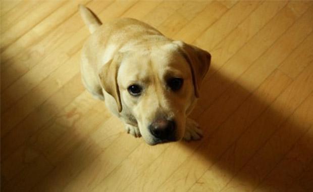 강아지 기본 훈련법