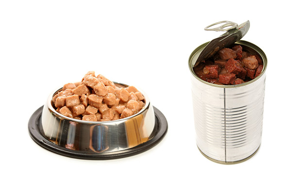 강아지 선호하는 음식과 주면 안되는 음식