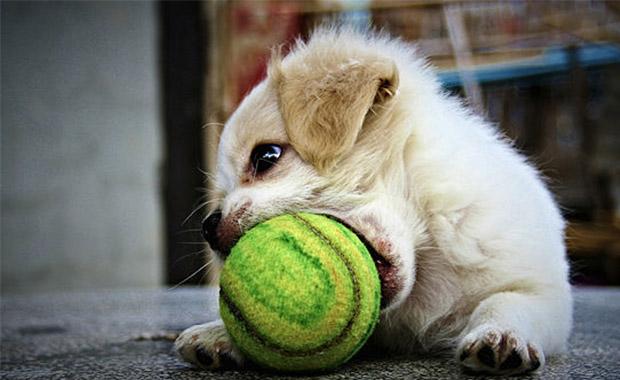 우리 강아지가 좋아하는 놀이!