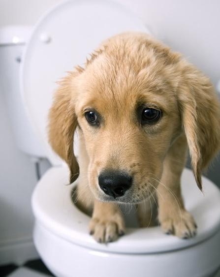 강아지 배변훈련