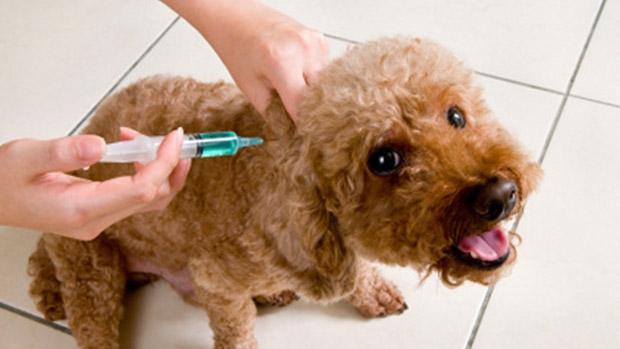 강아지 예방접종