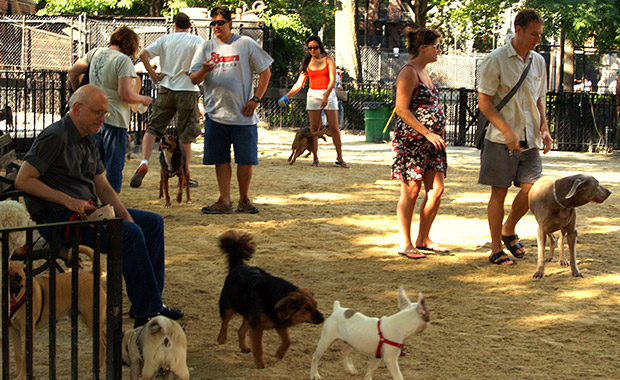 도시에 사는 개는 시골에 사는 개보다 수명이 평균 3 년 이상 높다는 연구 결과가 있습니다.