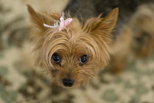 강아지 눈,귀 ,구강관리하기