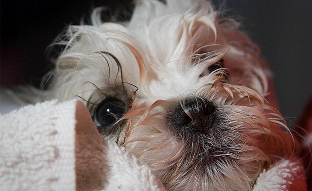 강아지 빗질과 목욕시키기