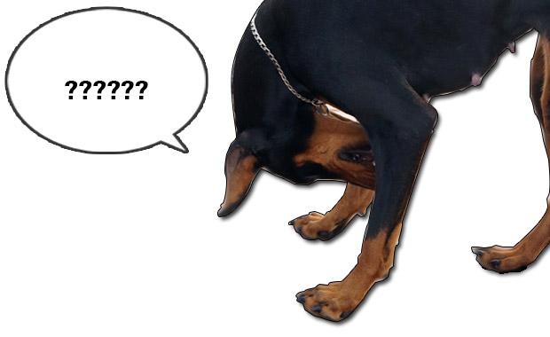 강아지 언어 퀴즈-이런 행동은 무슨뜻?